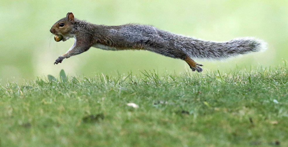 When squirrels fly (and other news)