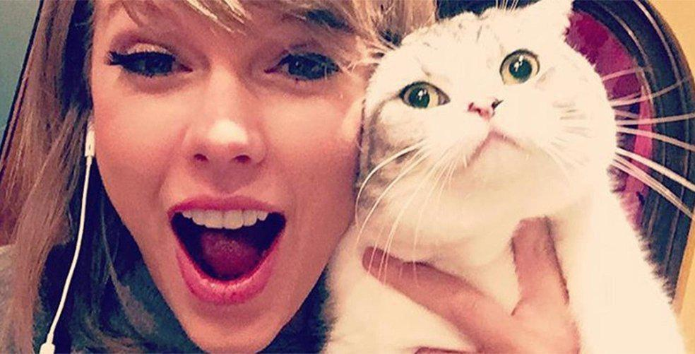 10 times Taylor Swift's cats were a major mood