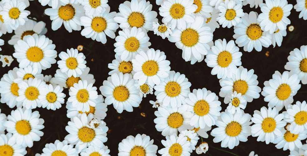 partywear-the-floral-dress-edit