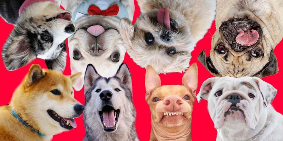 The Year of the Dog: 8 cute Insta dogs