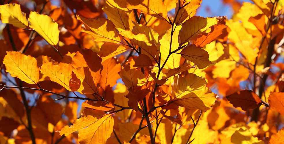 6 reasons to look forward to autumn